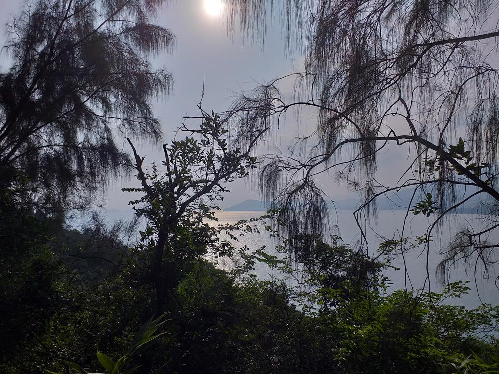 Tree views ... naturally