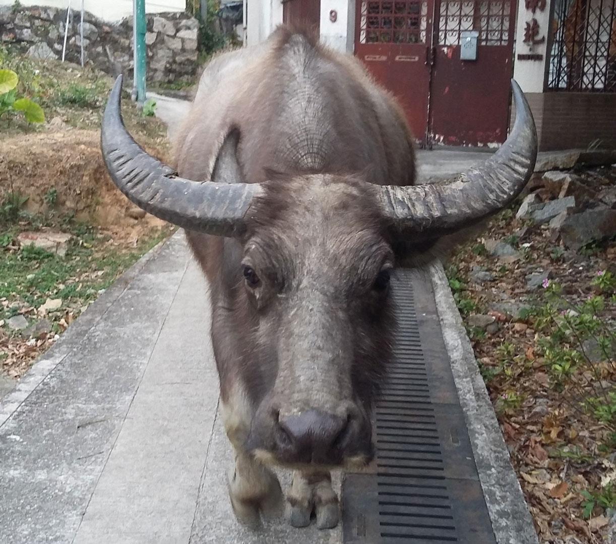 ex-march-buffalo-post