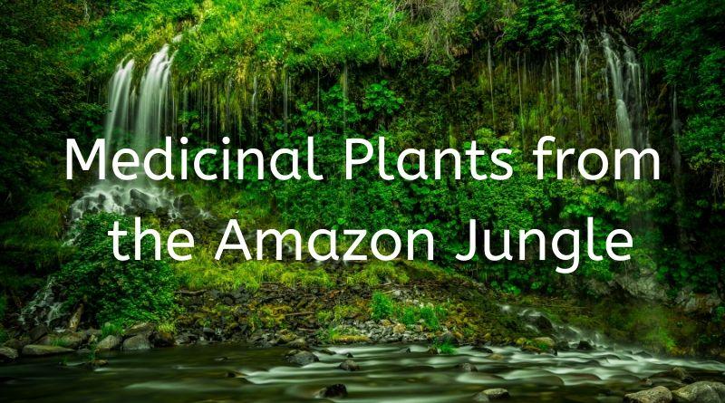 Amazon Plant Medicines